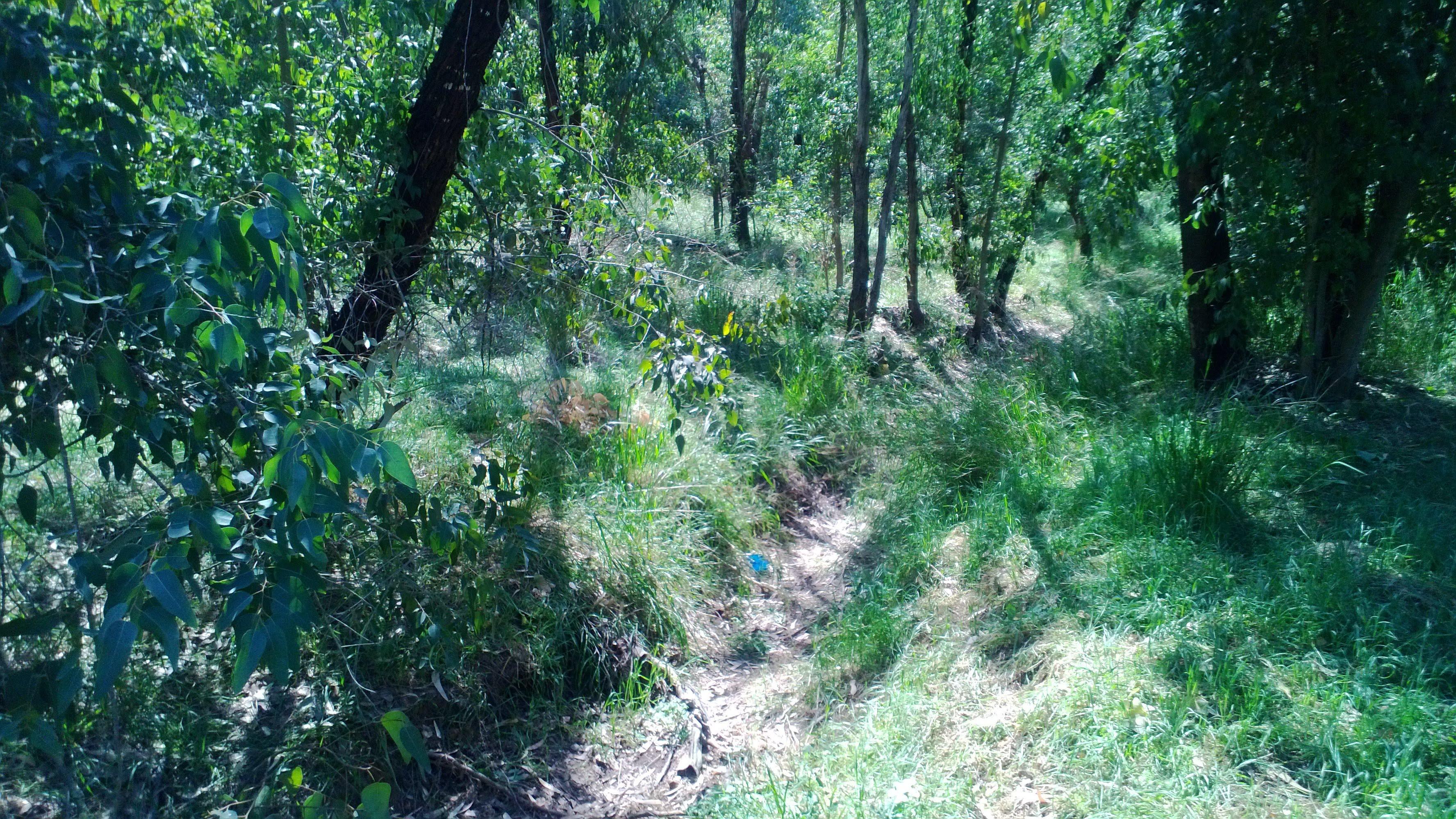 נחל נועם עובר דרך יער נועם